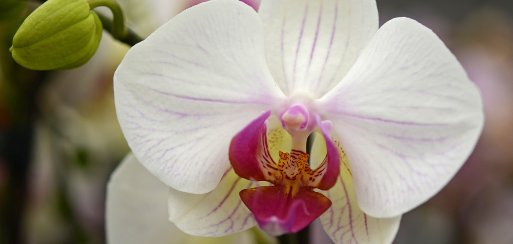 Orchid by Rene Mensen (CC BY 2.0)