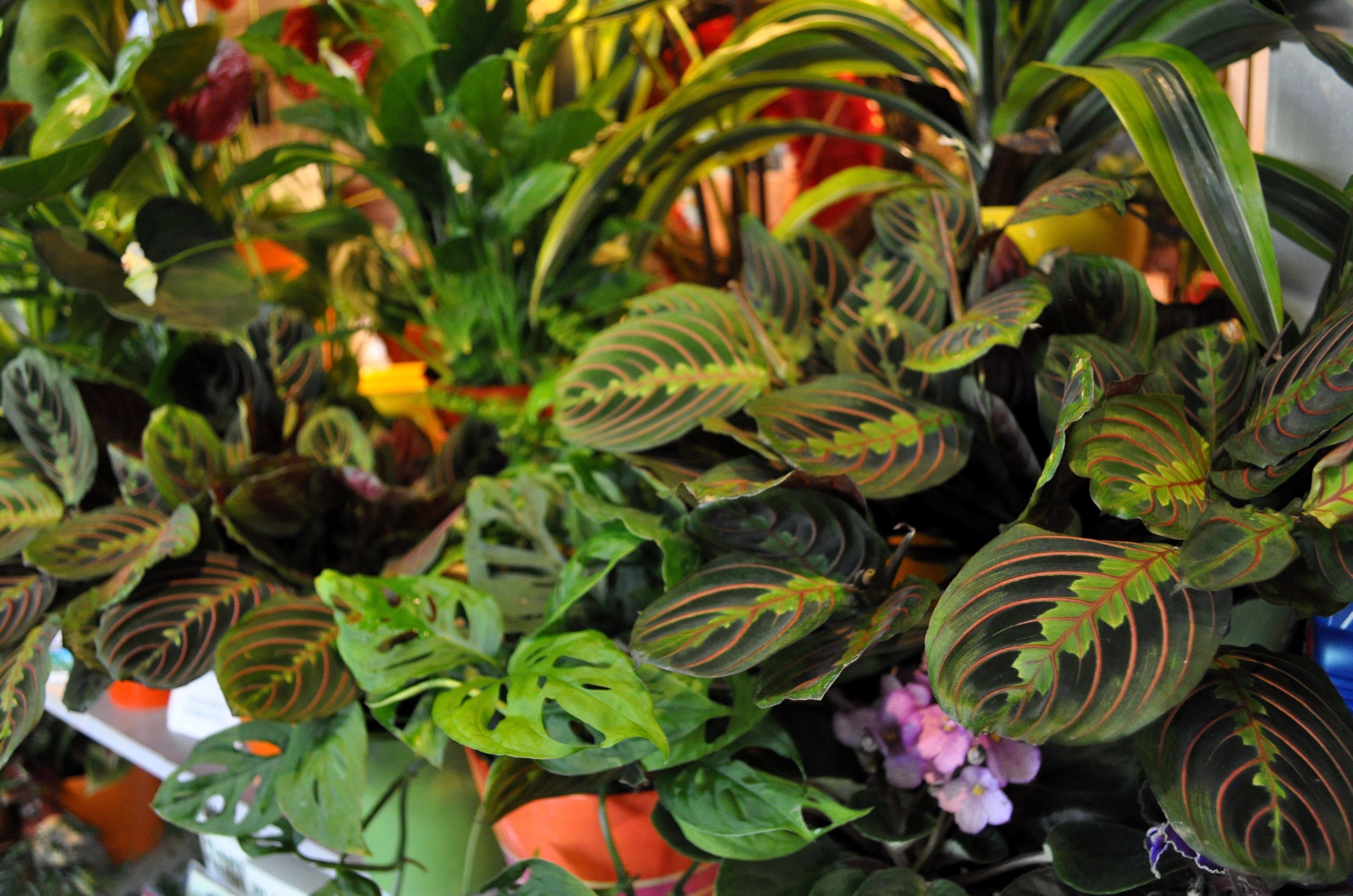 Cool Plants For Your Home Moving Happiness Home