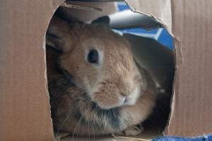 in her box by hans s (CC BY-ND 2.0)