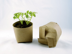 Seedling in a toilet paper roll repurposed as a mini planting pot by girlingearstudio (CC BY 2.0)