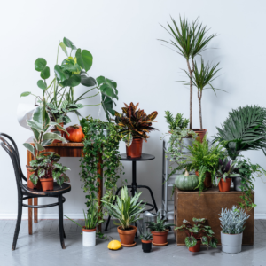 Protecting your plant collection before moving day