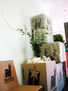 pack your houseplants in a moving box before moving day