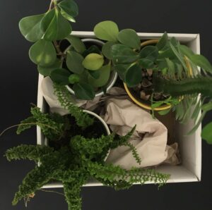 pack your plants in a moving box