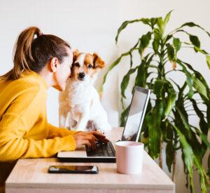 stay at home with your pets while you work
