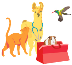 Doctor Dolittle Luxury Package