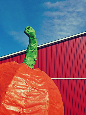 Giant Pumpkin Red Barn Blue Sky