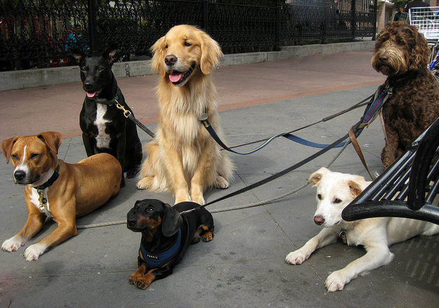 Dog Walking: Photo courtesy of https://herepup.com/dog-food/